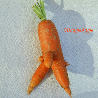 A strange shaped (and very rude!) carrot from my vegetable bed!