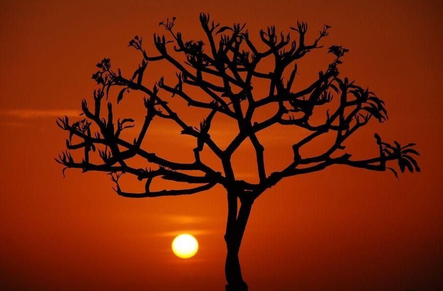 29. Tree and Sun by Yande Ardana