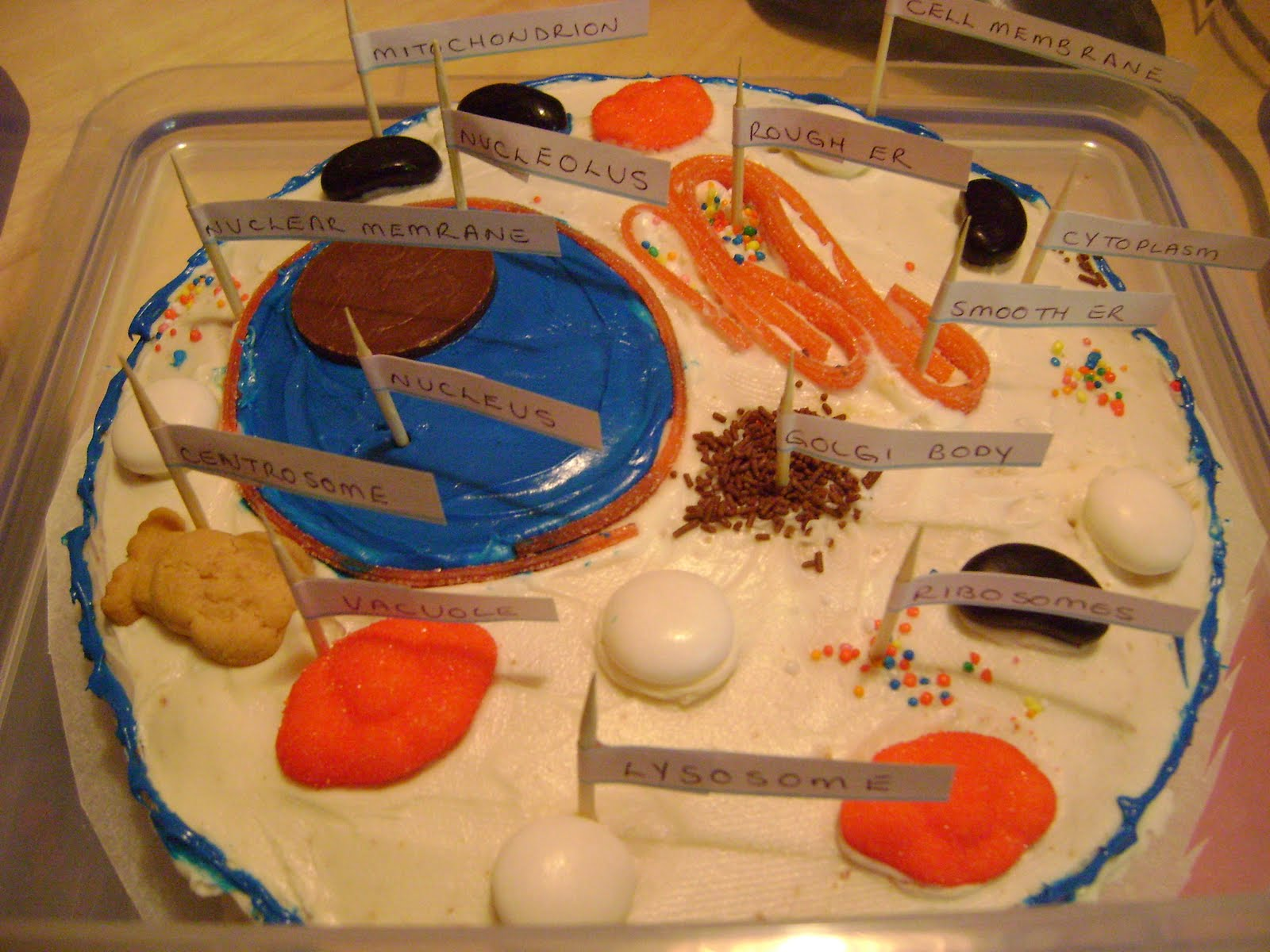 Edible Plant Cell Project Ideas http://www.outofours.com/2011_06_01_archive.html