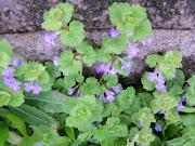 Flora #2