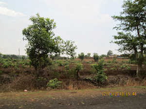 Reclaiming the forests along the Jabalpur to Bandhavghar highway route.