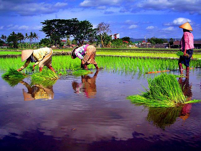 Empat Kabupaten Belajar Perubahan Iklim di Bantaeng