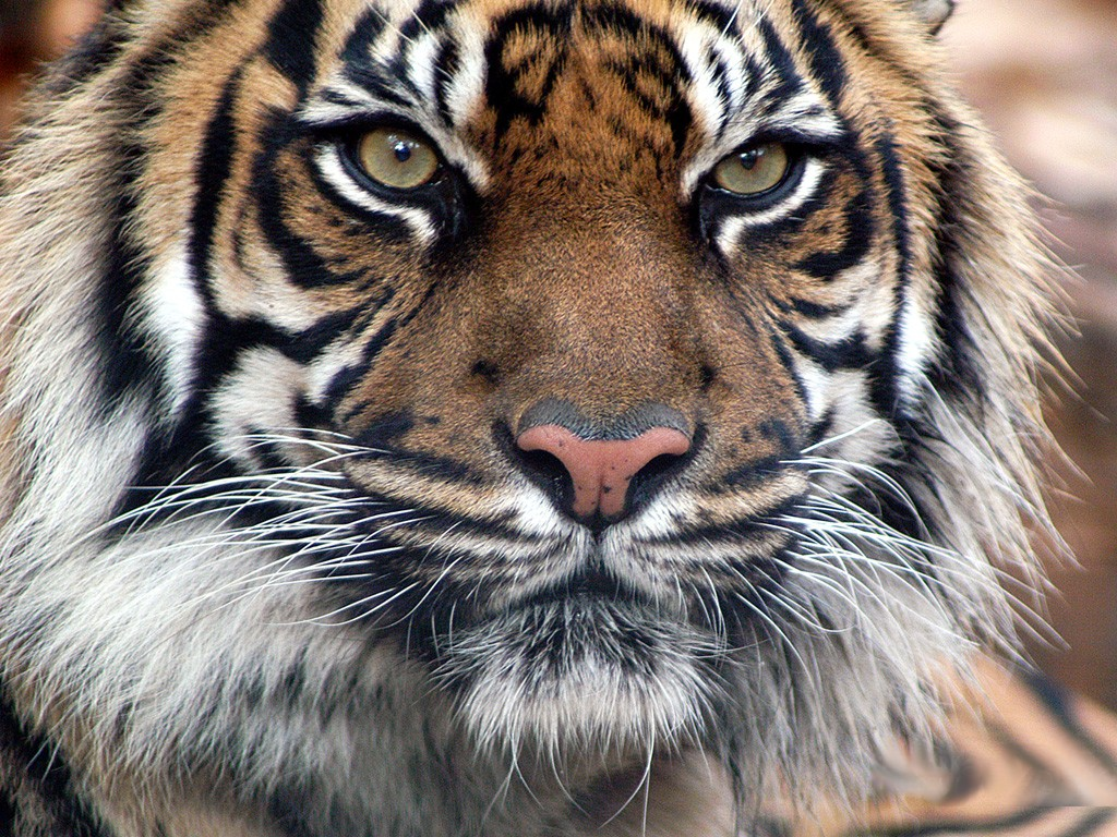 Animal Wallpapers | Wild Animal | Facts | Videos | Animals Pictures