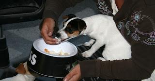Hand feeding milk and honey bread