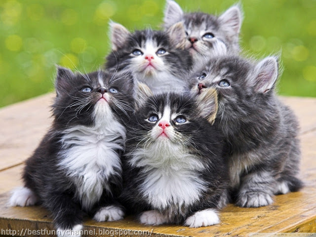 Funny five kittens.
