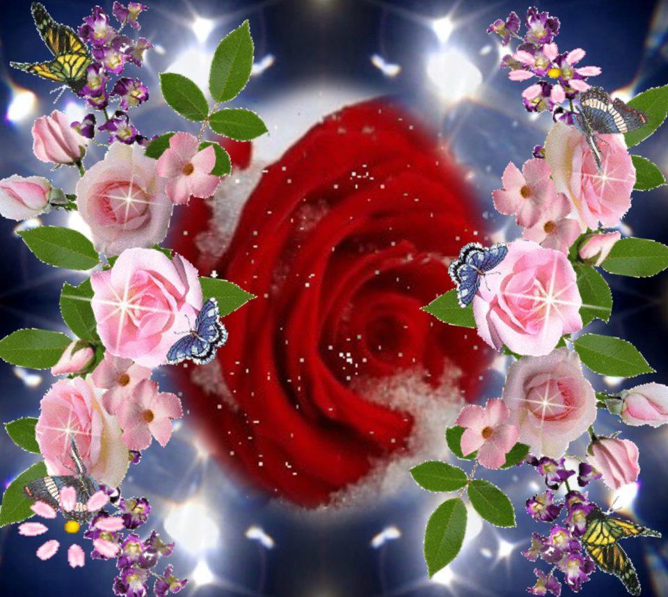 gifs animados cia  rosa vermelha