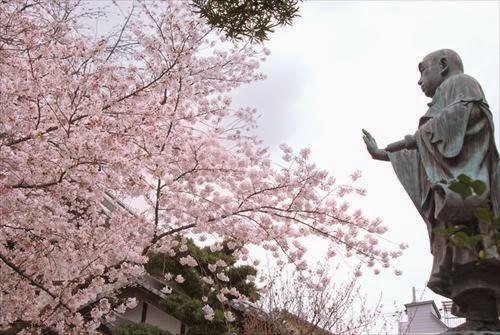 墨染寺(ぼくせんじ)黒染桜