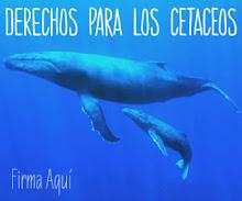 Declaracion de Derechos para ballenas y delfines