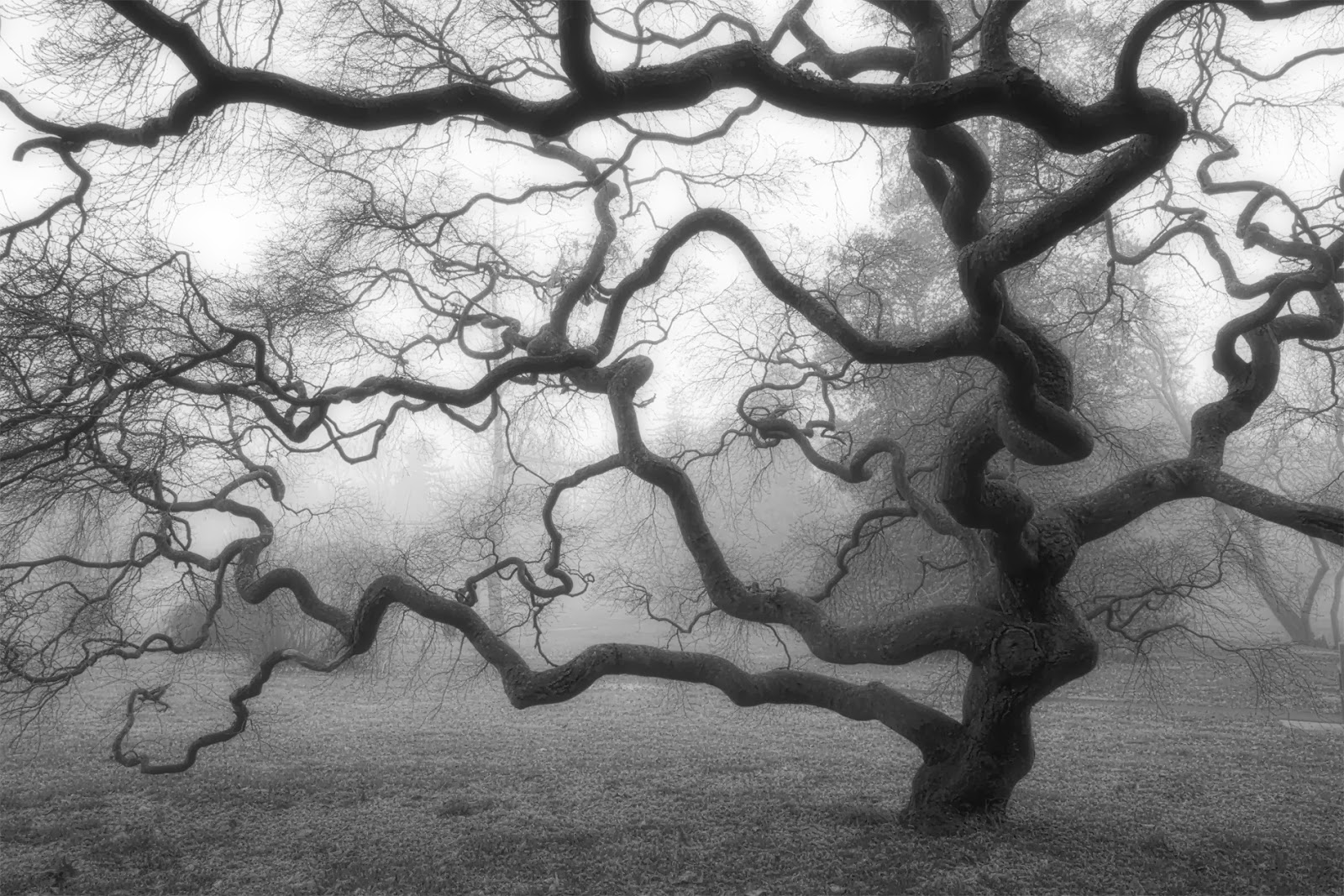 josh friedman photography the tree ch ch ch ch changes winter foggy morning