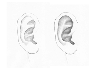Shading of an ear