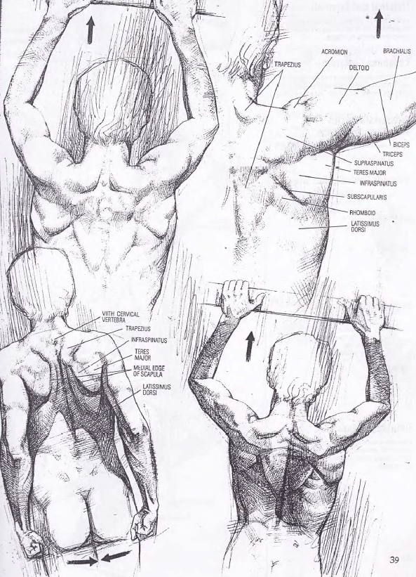 Drawing Human Anatomy By Giovanni Civardi Art Books Power