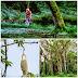 11 Pokok Yang Menjadi Tempat Tinggal Hantu