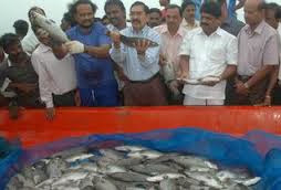 Central Marine Fisheries