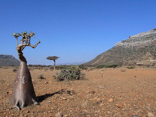 Socotra Island. La isla de la Felicidad