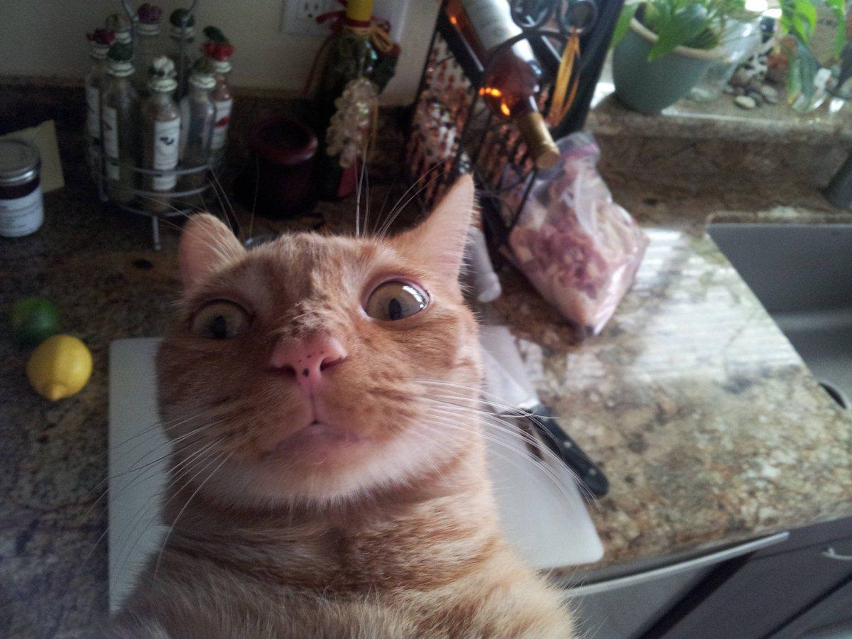 Пытался подпрыгнуть и достать до камеры - прикольные коты 22-11-12
