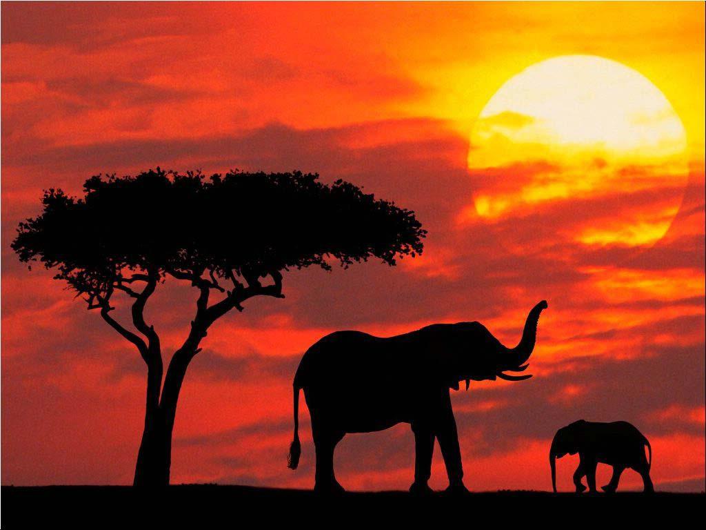 http://4.bp.blogspot.com/-lUo9D3_vn2c/TlajTeCQ0yI/AAAAAAAACh4/aoxNyAD9gsQ/s1600/Elephant+wallpaper3.jpg