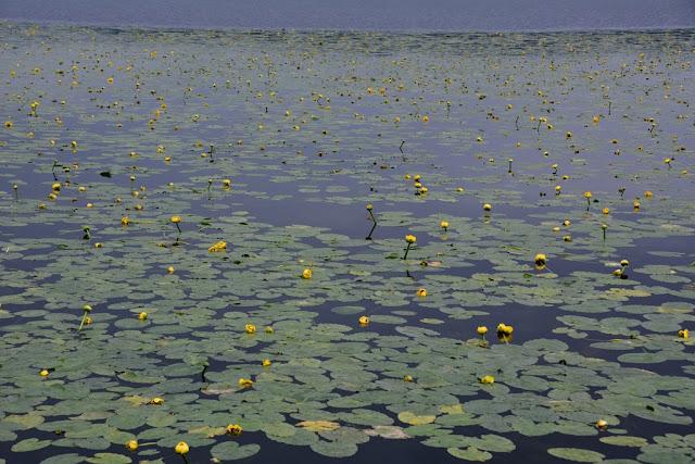 Alaska flower lake