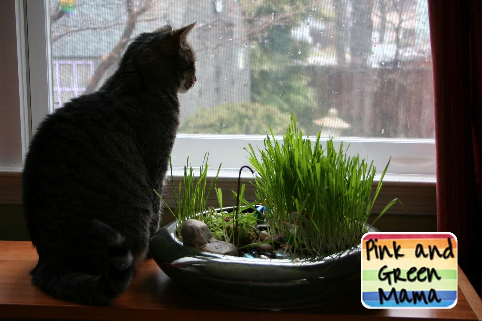 Pink and Green Mama: * Indoor Cat Fairy Garden