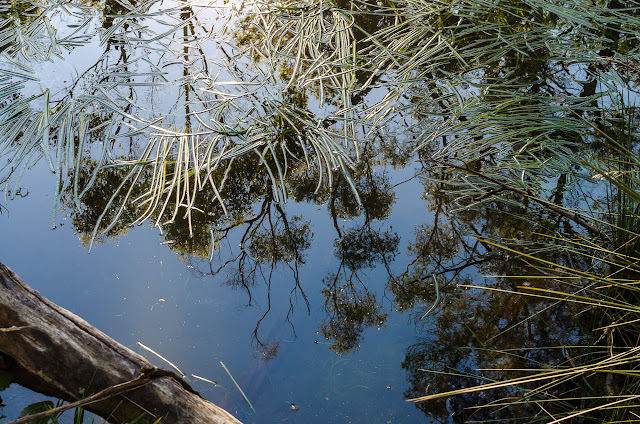 reflections on water in grahams creek