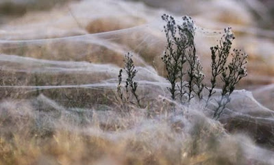 Penjelasan Ilmiah Hujan Laba-laba di Australia