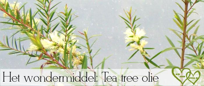 http://www.zusjesvandemode.nl/2014/08/wondermiddel-tea-tree-olie-wat-kun-je.html#more