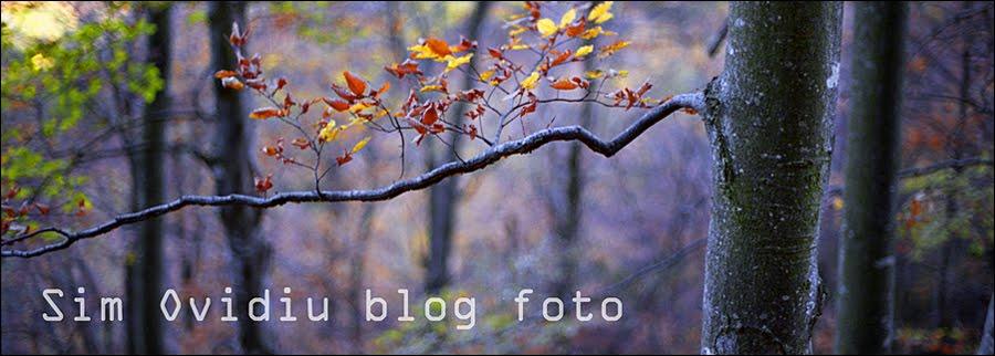Ovidiu Sim blog foto