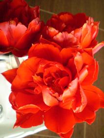 Plnokvěté tulipány ze zahrádky na stůl 2017