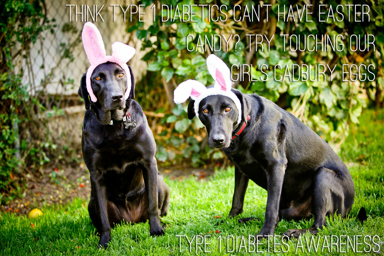 Can Dogs Eat Chocolate Myth