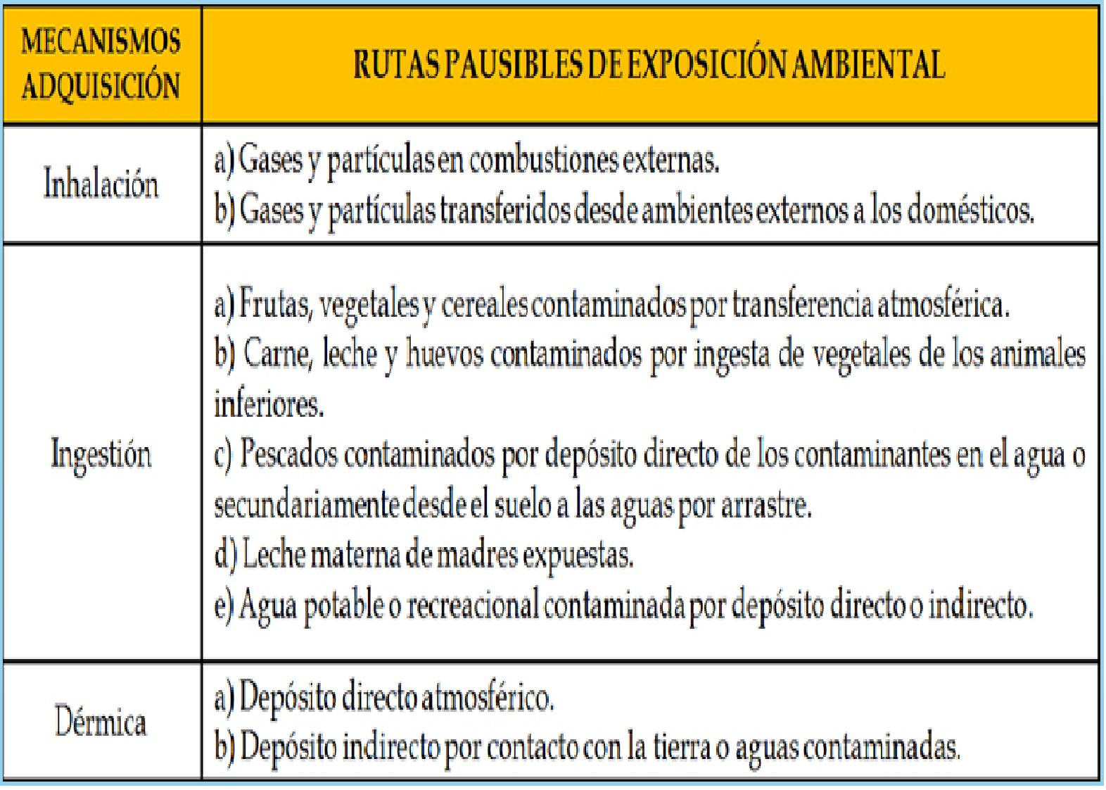 Sistema Respiratorio En Maquetas Reciclaje | newhairstylesformen2014