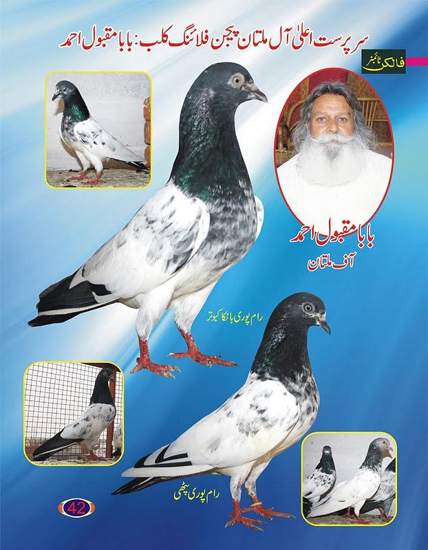 K Magazine Pigeon Pigeons Magazine  Urdu