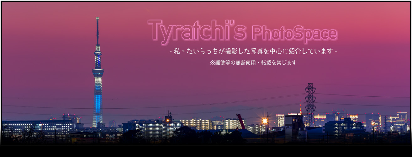 Tyratchi's Photo Space