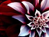 Flower Wallpaper | Desktop Wallpaper – Desktop Hd Wallpapers