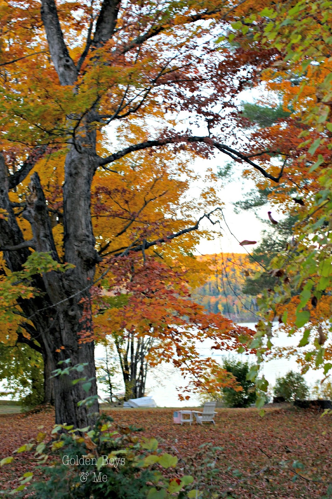 Adirondack chair by lake with fall foliage-www.goldenboysandme.com