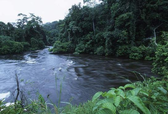 the characteristics of the tropical rain forests in the congo basin The congo is the earth's second largest river by volume, draining an area of 37 million square kilometers (14 million square miles) known as the congo basin much of the basin is covered.