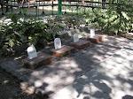 Papa's Pet Cemetery