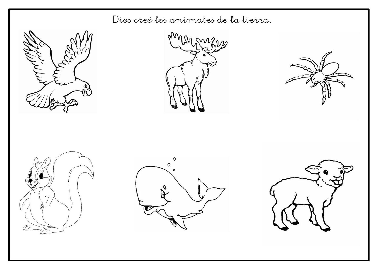 Ficha: Dios creó los animales de la tierra.