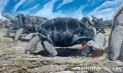 Tortuga gigante de Rodrigues Cylindraspis peltastes