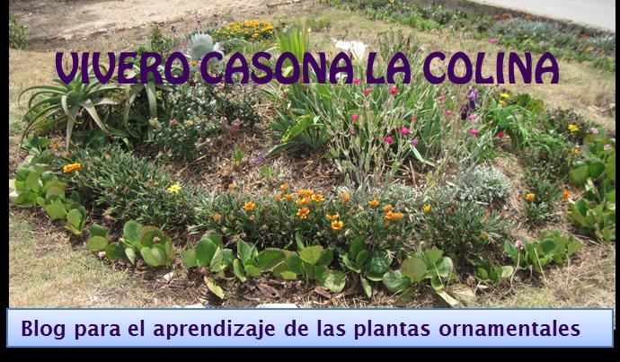 Vivero casona la colina tipos de plantas for Viveros en colina