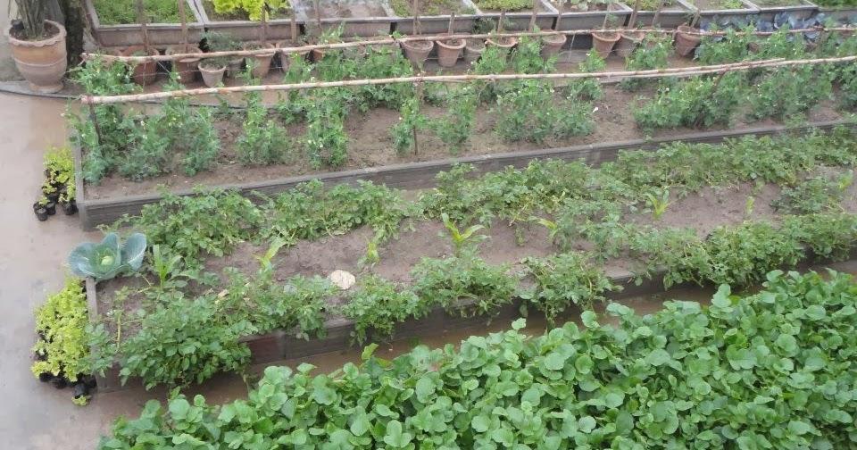 My Home Vegetable Garden Express Photos