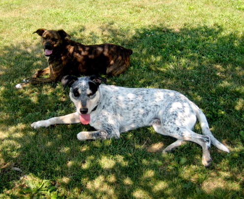 Travel With Whippets Fishers Dog Park Amp Taking Care Of