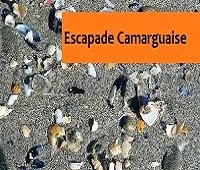 http://leschamotte.blogspot.fr/2012/08/escapade-camarguaise.html