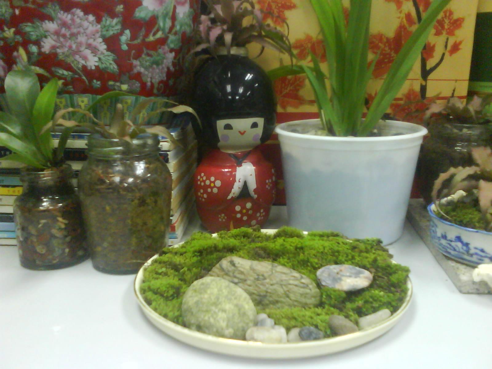 garden chronicles indoor plants for the office desk top