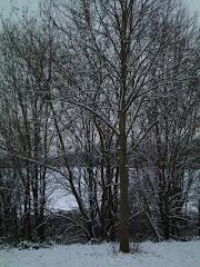 <<<--Winterlandschaft--->>>