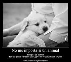 Frases De Amor: No Me Importa Si Un Animal Es Capaz De Razonar