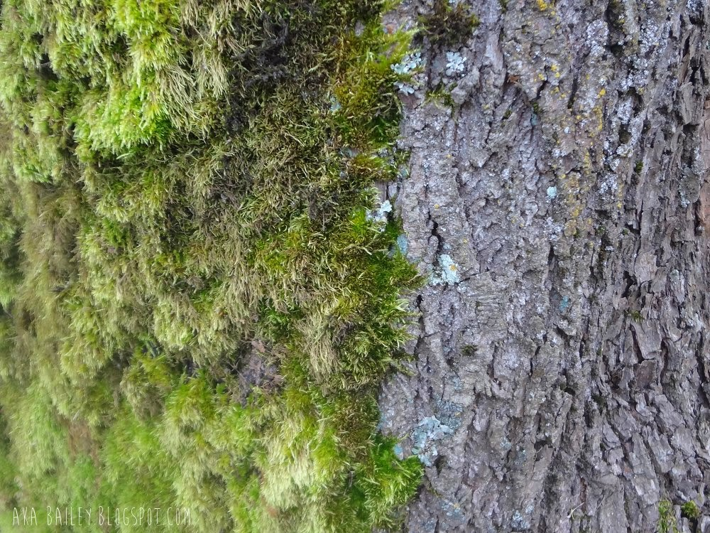 Tree covered in moss on one side