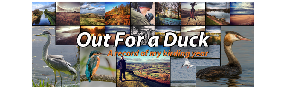 Out4aduck - A record of my birding year