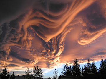 Undulatus asperatus in New Zealand