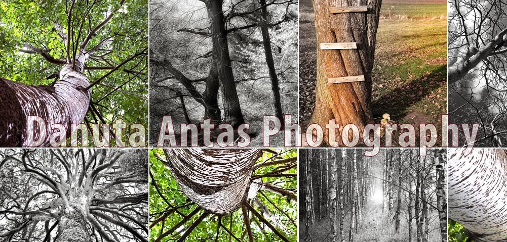 Fine Art Photography Blog by Danuta Antas