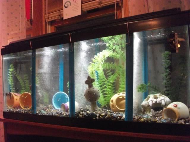 20 gallon long fish tank uk details about 20 gal long for Petsmart betta fish tanks