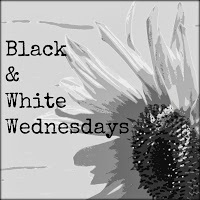 Black And White Wednesday